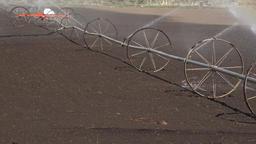 Irrigation water sprinkler agriculture farm field 4K 007 Footage