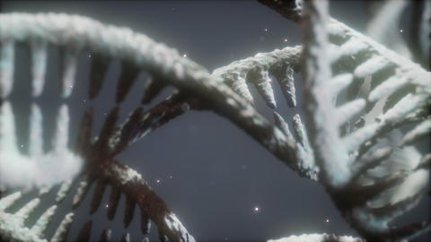 structure of the DNA double helix animation Live Action