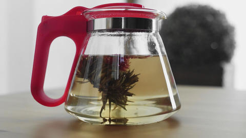 Traditional Chinese flower tea blooming in glass teapot Live Action