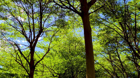 forest trees. nature green wood background Live影片