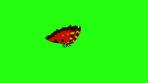 Red-striped butterfly flies chroma looped Animation