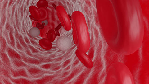 Red and White Blood Cells Flowing Inside a Vein Animation