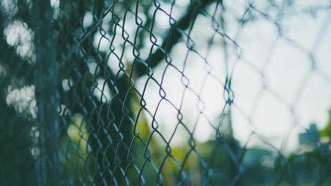 フェンスと新緑 ライブ動画