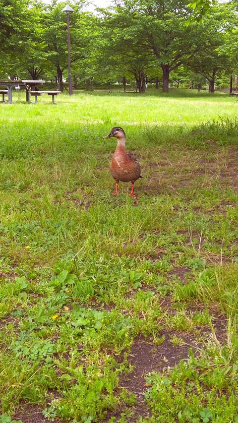 Duck_portrait Live Action