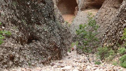 Maple Canyon Box Canyon family dog hike HD 2606 Footage