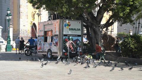 Mazatlan street vendor pigeons P HD 4763 Live Action