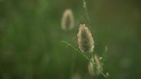 Spring flowers. Close-up of field plants swaying in the wind. Lush spring greens Live Action