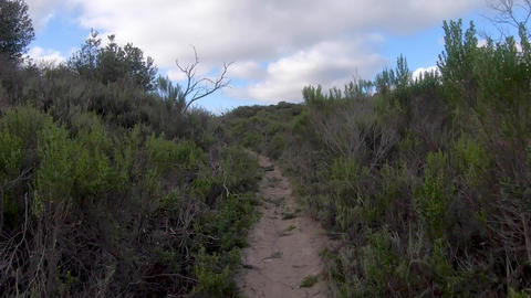 Timelapse riding mountain bike in a small singletrack trail in the mountain Live Action