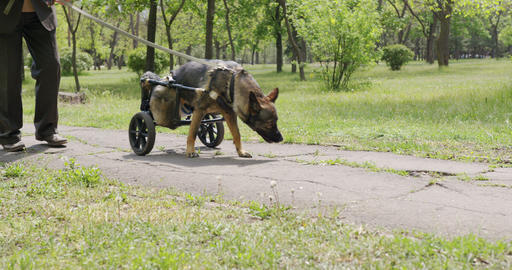 A dog who is in a wheelchair for animals Live Action