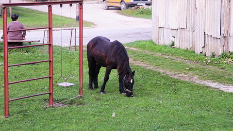 A horse is grazing green grass in the yard GIF