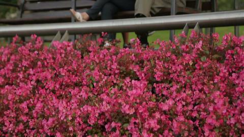 Senior citizens sitting on bench in city garden, enjoying rest in municipal park Footage