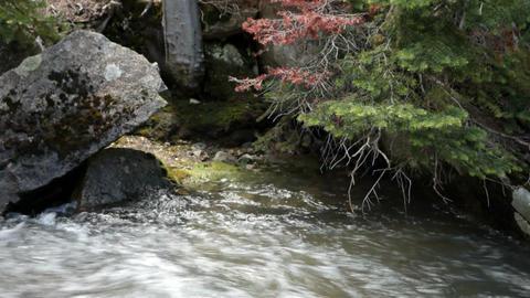 Mountain stream shore edge P HD 0666 Footage