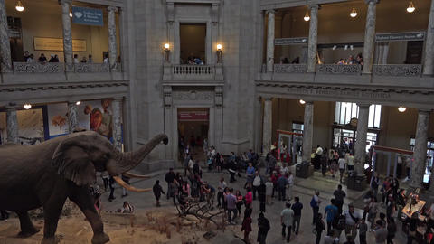 Natural History Smithsonian Museum elephant entrance fast 4K 076 Footage