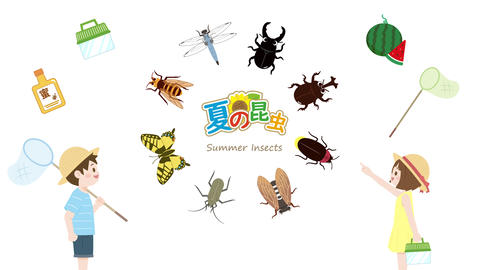 Summer insects animation Videos animados