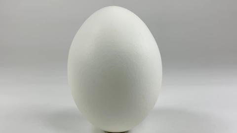 Chicken egg013 ライブ動画