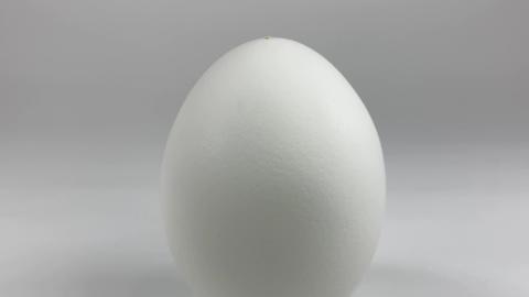 Chicken egg003 ライブ動画