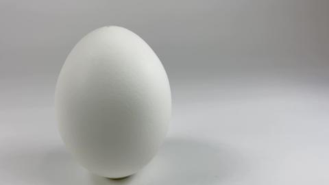 Chicken egg004 ライブ動画