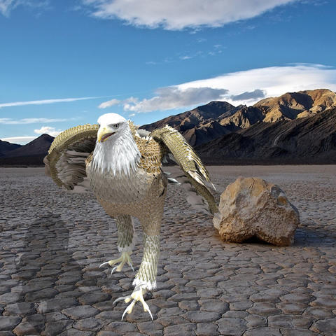 White American Bald Eagle 3D Model