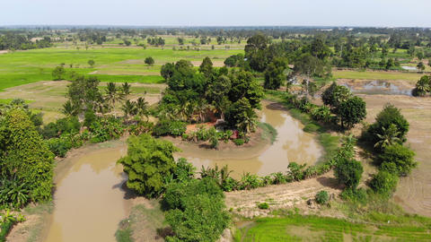 Aerial view scenic of river rice field and agriculture farm Acción en vivo