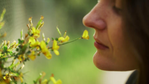 Spring flowers. Close-up of blooming yellow flowers. Girl sniffs fragrant Live Action