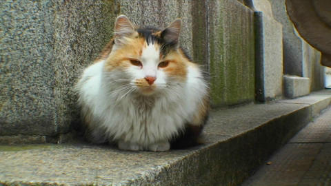 Cat in graveyard in Buenos Aires Stock Video Footage