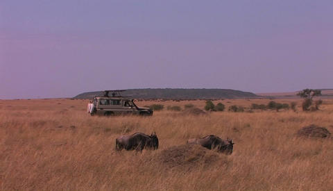 Off road vehicle driving in african savanna Stock Video Footage