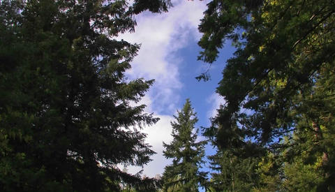 Strong winds blow a forested area of tress Stock Video Footage
