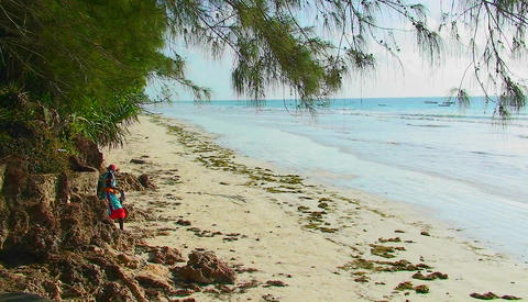 A woman walks along the beach then sits down, talking or... Stock Video Footage