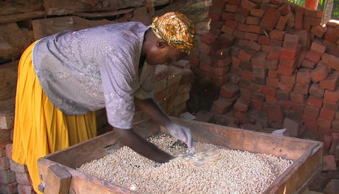 A woman threshes and inspects a ground up food stock Stock Video Footage