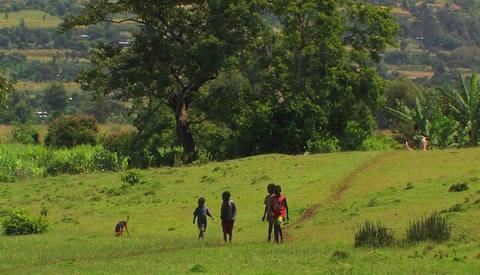 Four boys walk through a green field with a dog Footage