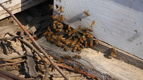 Bees swarm around wood Stock Video Footage