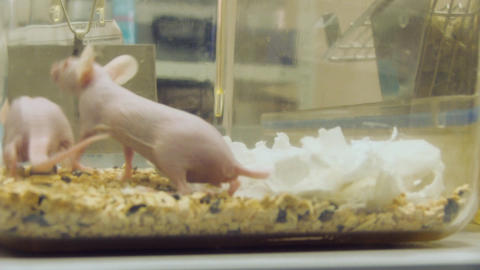 laboratory mouse Stock Video Footage