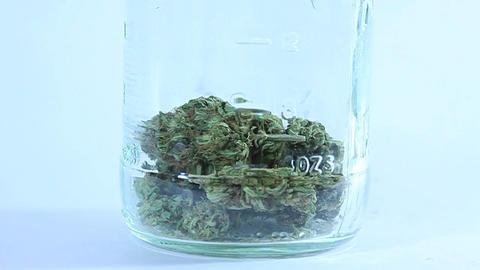 A person drops dried marijuana buds into a glass jar Footage
