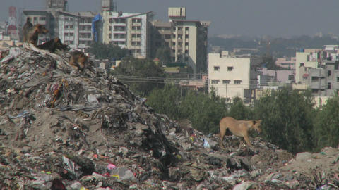 Dogs walk through a pile of garbage outside a city Stock Video Footage