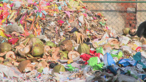 A dog in a rubbish heap by a road in India Stock Video Footage