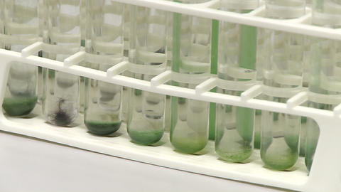 Test tube holder contains a collection of different sorts of cyanobacteria algae, a shadow changes t Footage