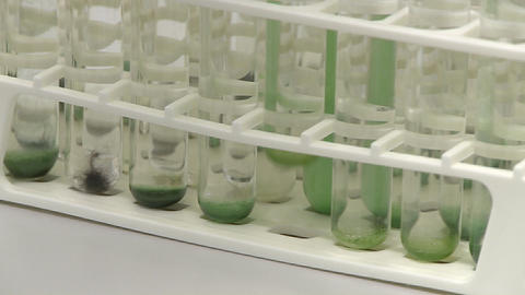 Test tube holder contains a collection of different sorts... Stock Video Footage