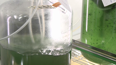 Algae flask in a shaker. Flasks with algae are shaken in order to allow the algae to grow faster tha Footage