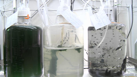 Dolly movement from a photo-bioreactor we see different sorts of cultures of algae being aired with Footage