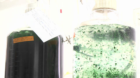 Two algae flasks containing different species of... Stock Video Footage
