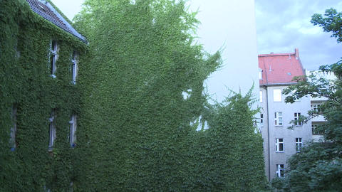 Green wall with leaves being shaken by the wind. We see... Stock Video Footage