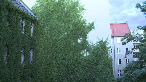 Green wall with leaves being shaken by the wind. We see an inner patio with a tree, neighbor buildin Footage