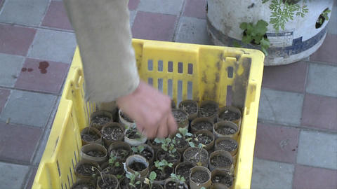 Small plants in cardboard containers are given away for... Stock Video Footage