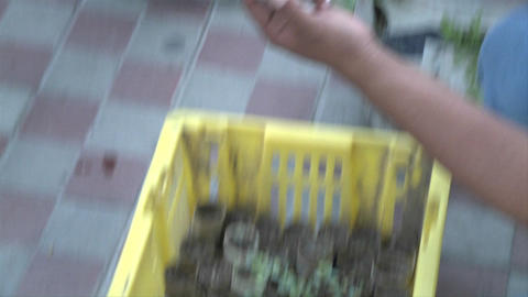 Small plants in cardboard containers are given away for people to transplant them in their homes. Ur Footage