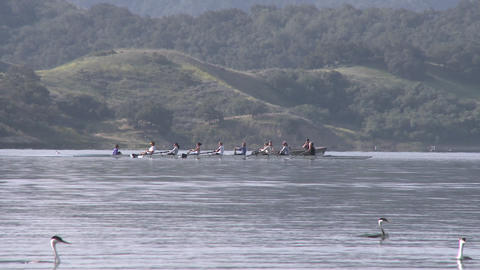 Panning an eight person rowing sweep being followed by their coach on Lake Casitas in Oak View, Cali Footage
