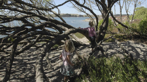 Time lapse of children playing in a tree at at Doran City Park in Bodega Bay, California Footage
