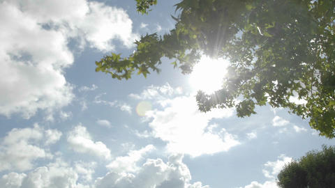 Time lapse of spring clouds passing over a tree in Oak... Stock Video Footage