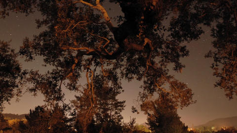 Time lapse of star trails and oak tree in Oak View,... Stock Video Footage