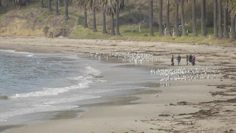 Time lapse of people chasing birds on Refugio Beach State... Stock Video Footage