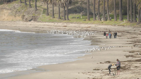 Time lapse of people chasing birds on Refugio Beach State Park, California Footage